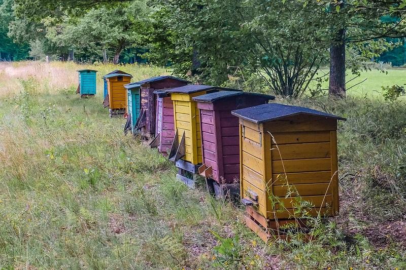 Čebelnjak ob gozdnem območju